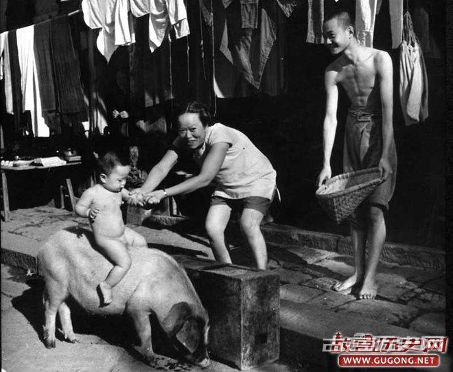 1941年,四川,骑猪的儿童(Carl Mydans拍摄)